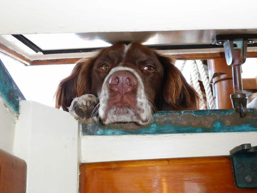 dog peeking through